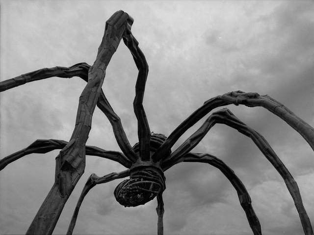 spider & art