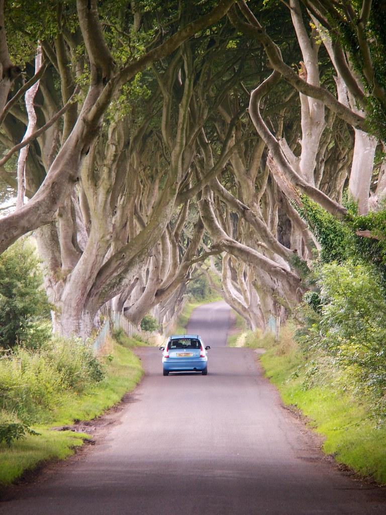 The Dark Hedges (Bregagh Road) - Stranocum - Northern Ireland 02