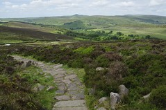 Back Forest to The Roaches (486)