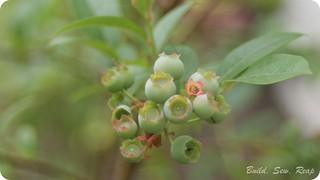 20140603 Garden Update_37