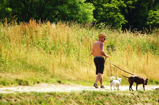 Dog Walking Williamsburg Va Amy Wallace