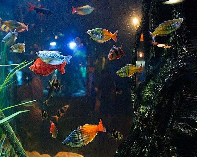 Red Fish Blue Fish Orange Fish Yellow Fish Flickr
