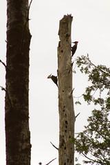 animal, branch, tree, fauna, trunk, woodpecker, twig, bird,