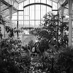 Kaisaniemen kasvitieteellinen puutarha (Bothanical garden)