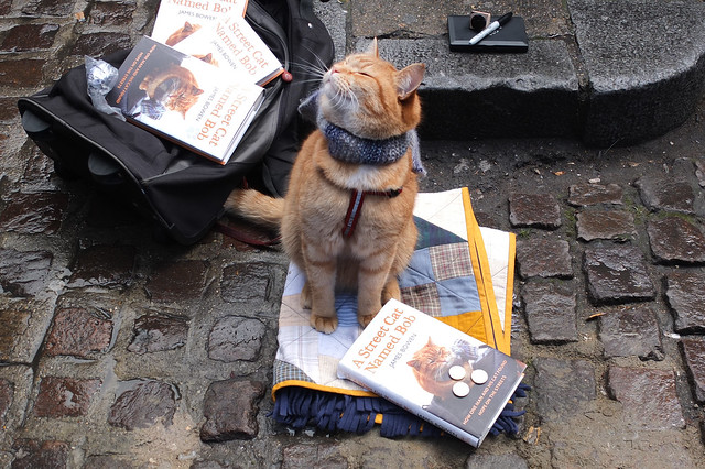 Bob the homeless cat earning a wage and loving the attention