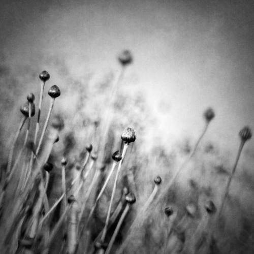 Blossom expectation