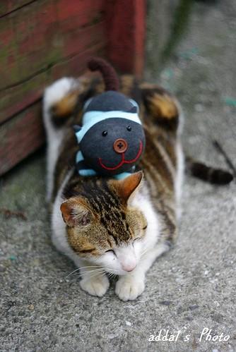 貓貓老鏡體驗(猴硐)