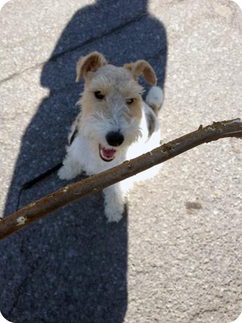 piper-stick