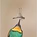 Gruccione / Merops apiaster (la presa della preda) by brunofurlan