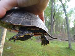 Turtle butt,