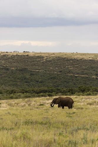 roaming the grasslands