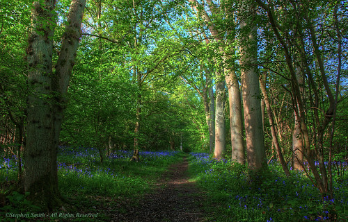 wood trees england nature bluebells woodland landscape spring woods nikon scenery northamptonshire may hdr 2014 southwick d80 shortwood