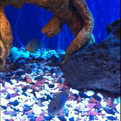 coral reef, fish, coral reef fish, organism, marine biology, underwater, reef,