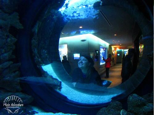Dallas World Aquarium A Whale Of A Tale