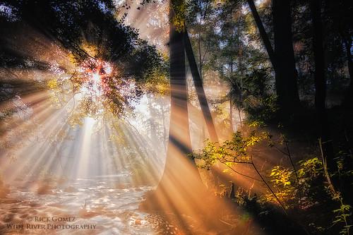 forest florida smoke lightbeams stateparks hillsboroughriver beamsoflight hillsbororiver rapidsinflorida