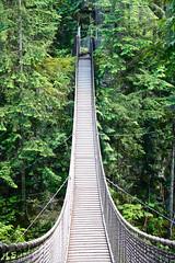 funicular(0.0), transport(0.0), lane(0.0), rolling stock(0.0), track(0.0), suspension bridge(1.0), canopy walkway(1.0), forest(1.0), rope bridge(1.0), bridge(1.0),