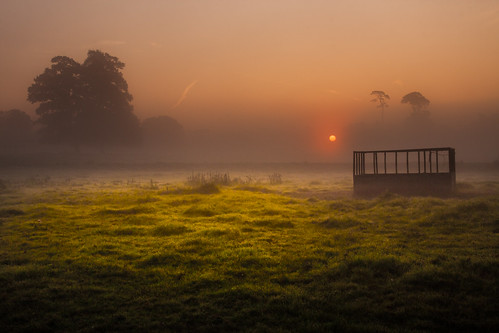mist green grass sunrise dawn gate feeder slough berkshire kevday laughable langleypark