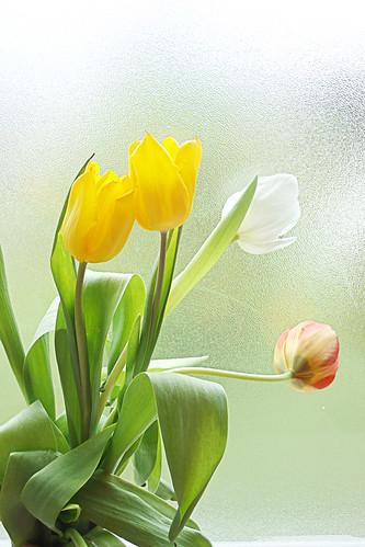 Tulipes de Pâques-28 width=