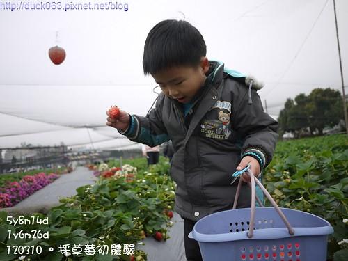 P1180076莓