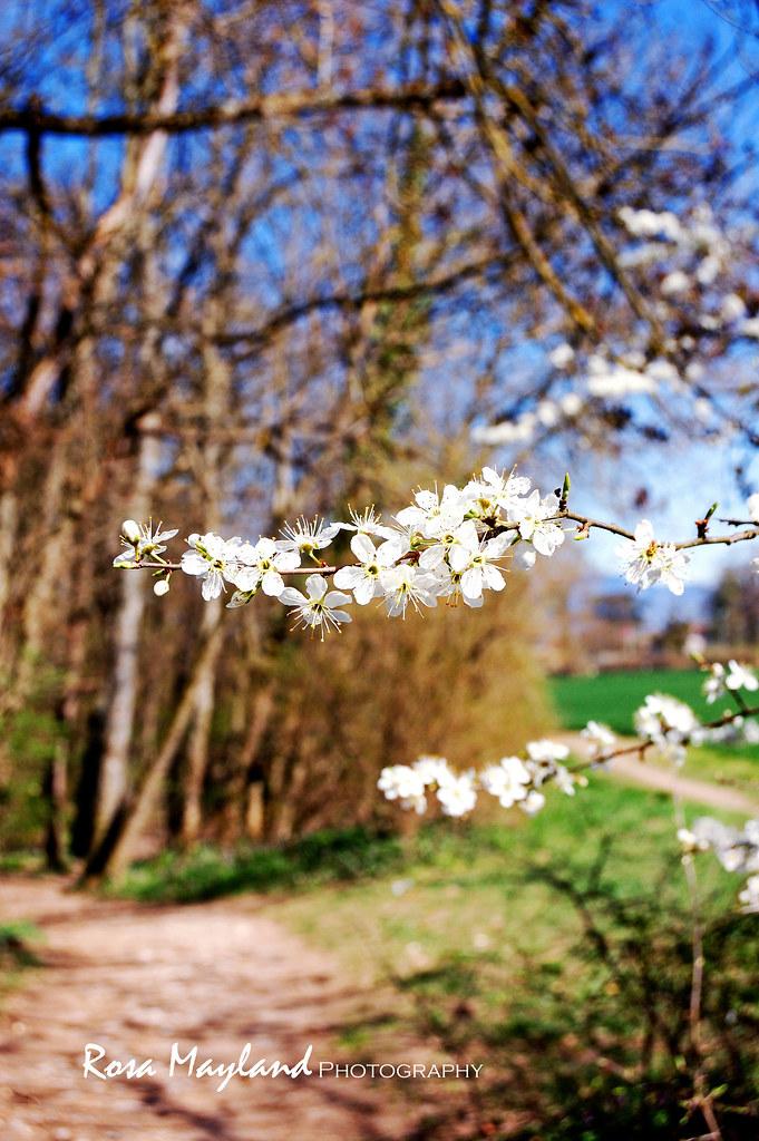 Spring Flowers 9 3 bis