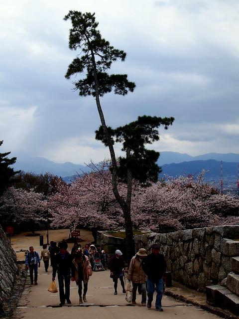 In Matsuyama Castle Park