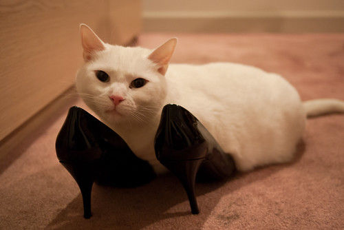 Shoe sniffing kitty