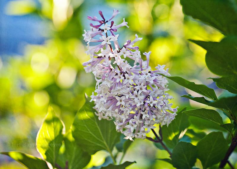 purplegarden-11