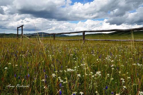sky flower nature nikon mongolia