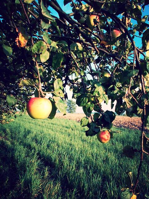 Jabłka, Nikon COOLPIX L26