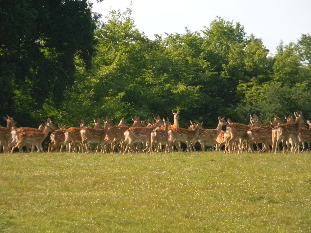 Deer Wadhurst Circular