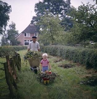 Jongen met kruiwagen vol tuinafval / Boy with wheelbarrow  filled with garden disposal