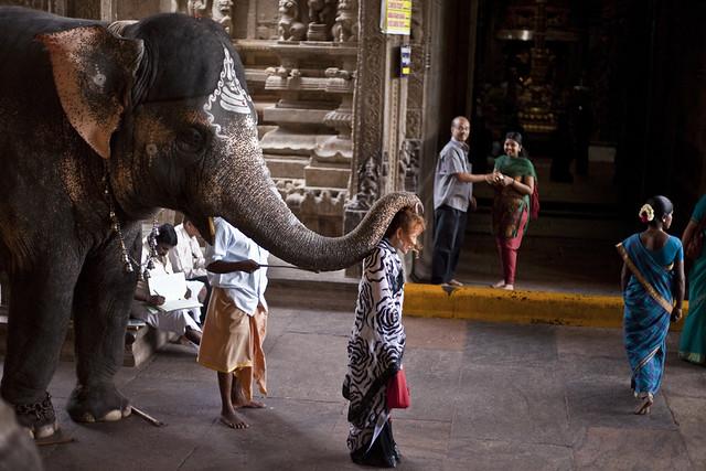 5911652454 2b661965cc z - Los templos Vímana en la India
