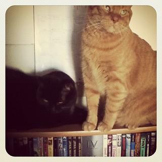 Friends <3 #catsofinstagram