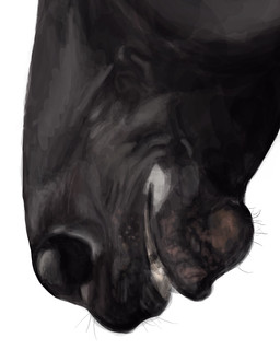 BttDB Day 11 Friesian detail