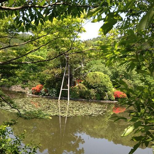 No puede ser más bonito!!! #ryoan #japan #japon #kyoto