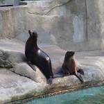 Seelöwen Zoo Wuppertal CK