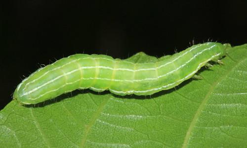 Caterpillar 29557