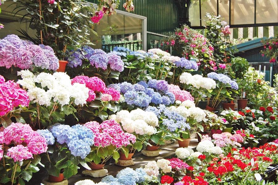 Marché aux fleurs (7)