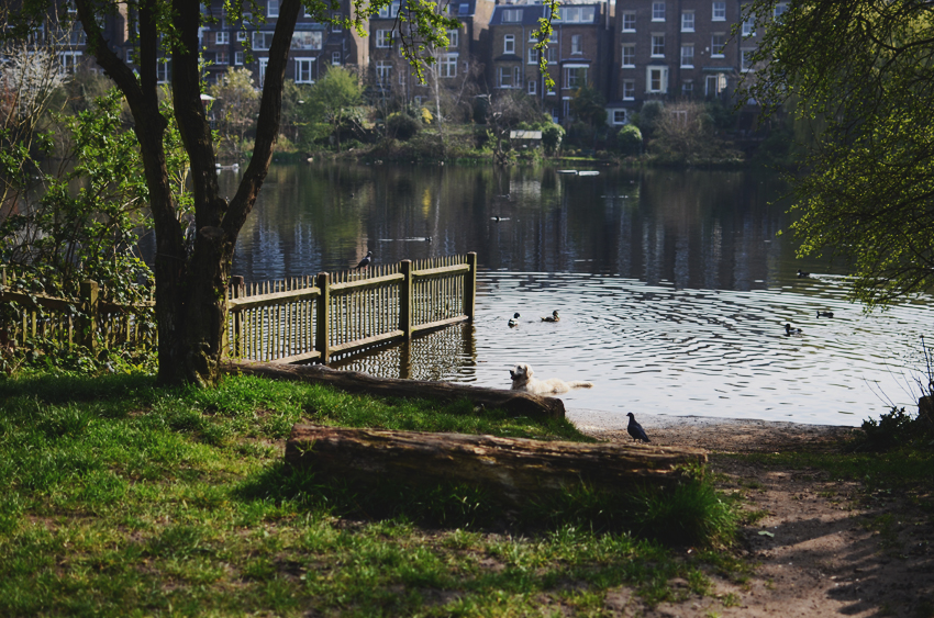 20 hampstead lake dog