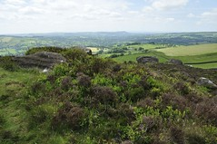 Back Forest to The Roaches (484)