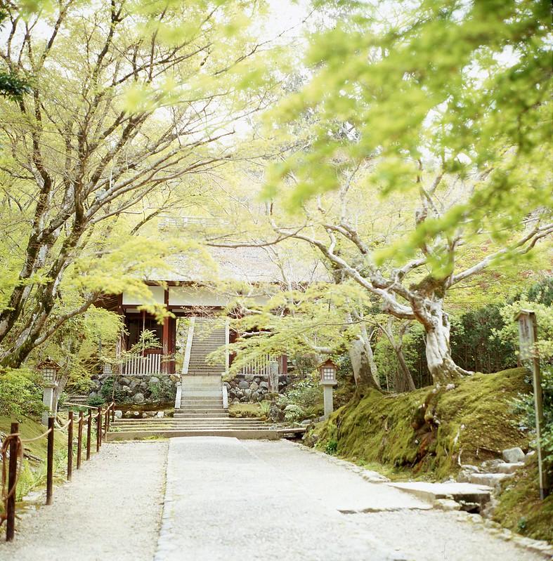 Kyoto, Arashiyama, the path to the Temple