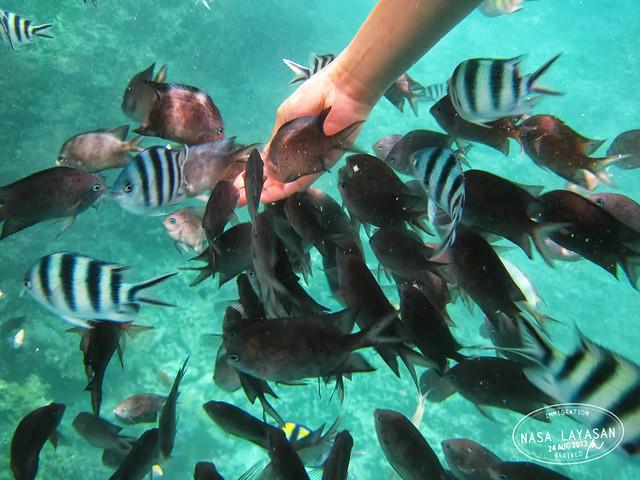 fishfeeding