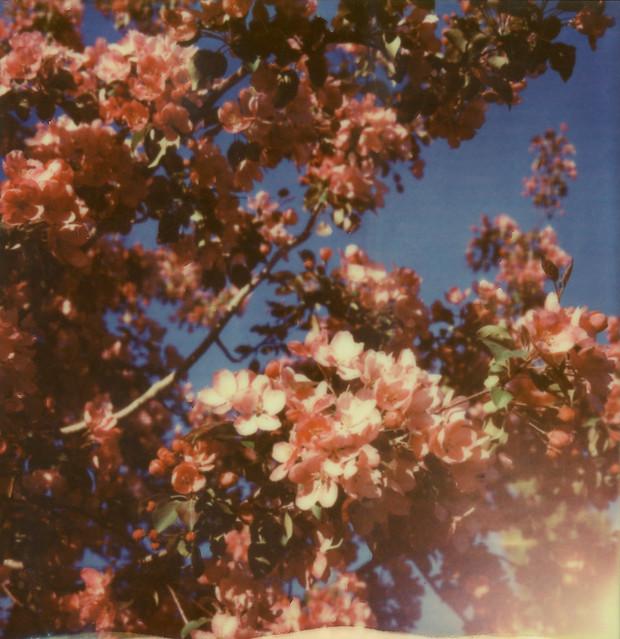 A Burst of Blossoms-12