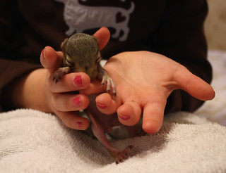 BabySquirrel6