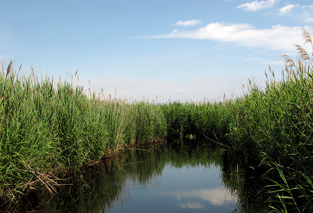 North shore marsh