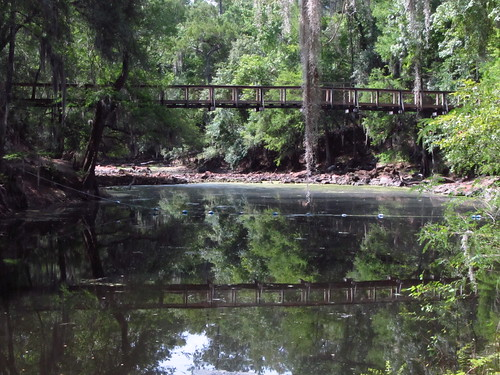 water forest woods florida suspensionbridge olenostatepark