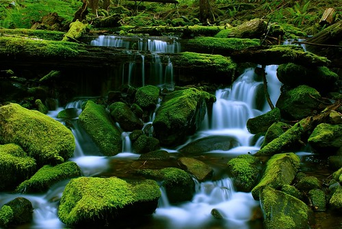 green water forest nationalpark moss waterfalls wa washingtonstate olympicnationalpark cascade