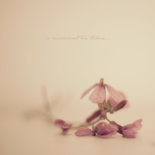 A moment in time... by Vanina Vila {Photography}