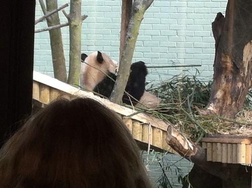 Yummy bamboo