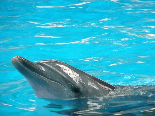 Inquisitive Dolphin